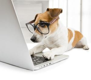 Dog Typing On Computer