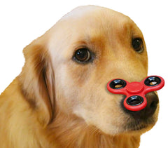Dog With Fidget Spinner On Nose