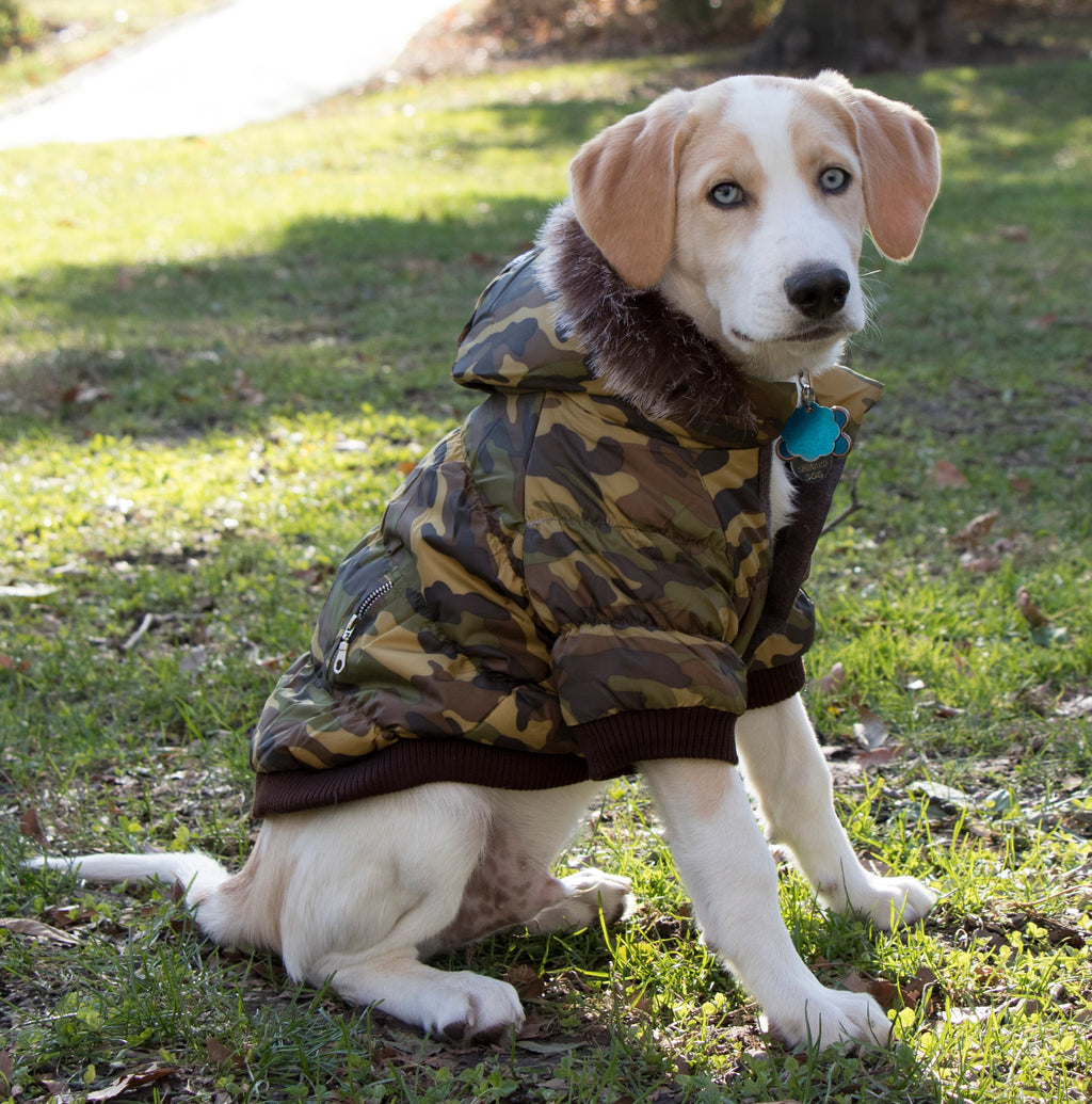 Metallic Fashion Pet Parka Coat - Camouflage (1CA)