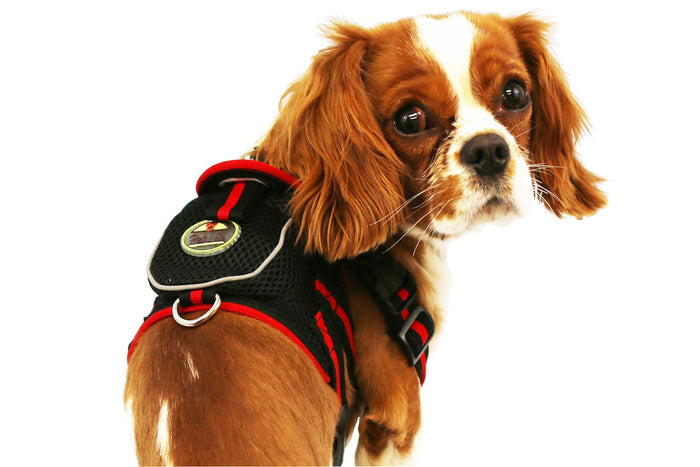 Pet Life ® 'Pocket Bark' Reflective Adjustable Fashion Pet Dog Harness w/ Velcro Pouch ...