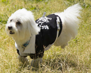Pet Life ® 'Varsity-Barkcity' Buckled Collared Dog Coat Jacket
