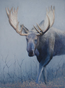 alces moose oil painting fine art by james corwin wildlife artist