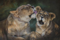 african mother lion grooms her cub art painting limited edition print