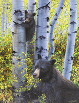 A baby black bear climbs an aspen tree to keep watch over mamma bear as she eats berries in the fall aspen trees painting art limited edition print by james corwin fine art montana artist