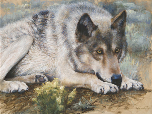 a grey wolf watches prey original oil painting wildlife art by james corwin