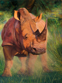 white rhino painting in south africa by wildlife artist james corwin