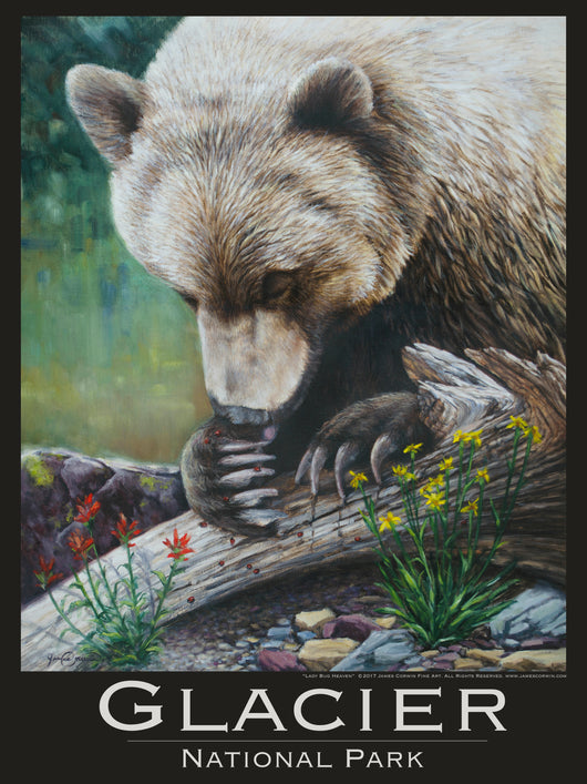 glacier national park poster grizzly bear eating lady bugs wildflowers by james corwin fine art wildlife artist