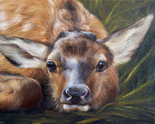portrait of whitetail deer fawn baby wildlife painting by james corwin fine art