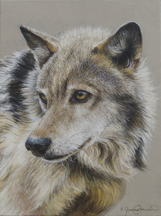 portrait of a grey wolf original oil painting wildlife art