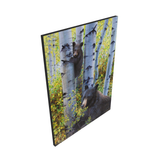 A baby black bear climbs an aspen tree to keep watch over mamma bear as she eats berries in the fall aspen trees painting art limited edition print on canvas