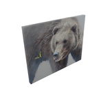 grizzly bear limited edition print wildlife art butterfly painting by james corwin fine art