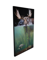 moose in water splashing eating seaweed turtle and perch fish swim away wildlife art by james corwin painting