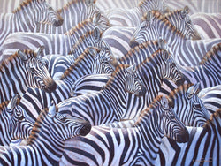 zebra herd wildlife oil painting by james corwin fine art wildlife artist