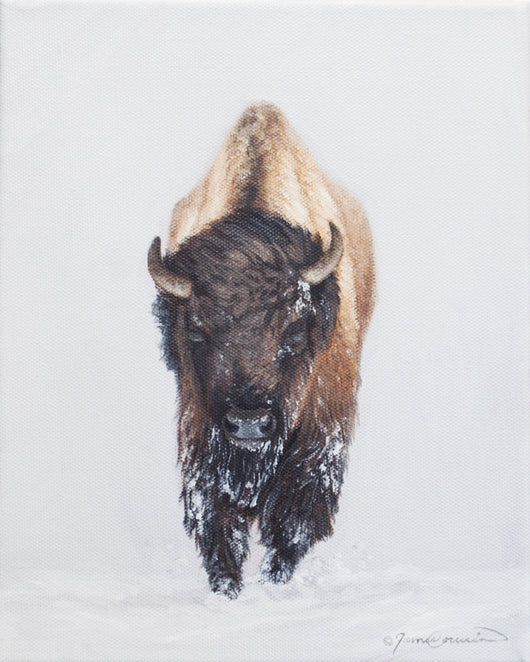 North American Bison Study - 8x10 Original Oil on canvas