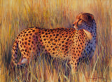 Cheetah oil painting fine art by james corwin wildlife artist