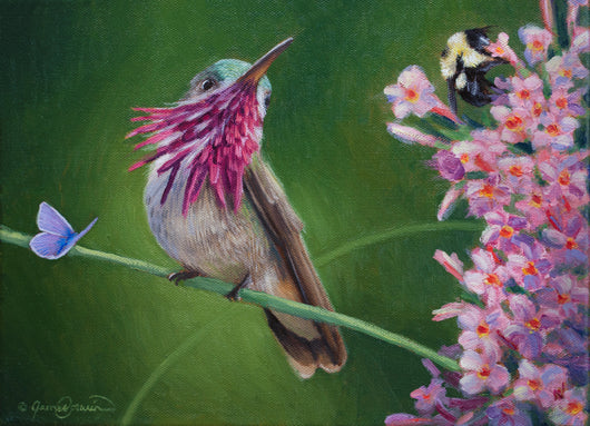 calliope hummingbird and little blue butterfly and bumblebee wait in line for flowers wildlife art by james corwin artist