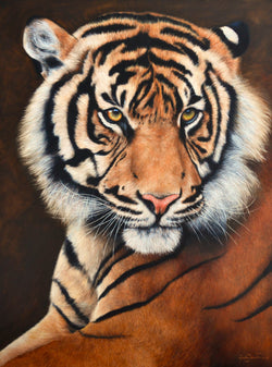 sumatran tiger portrait limited edition art print