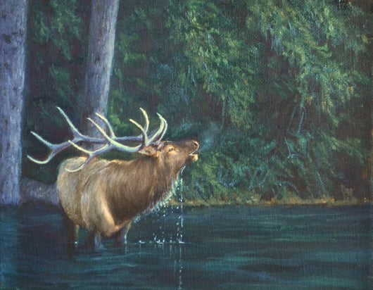 An elk bugles in while drinking from a river in early fall oil painting by wildlife artist james corwin