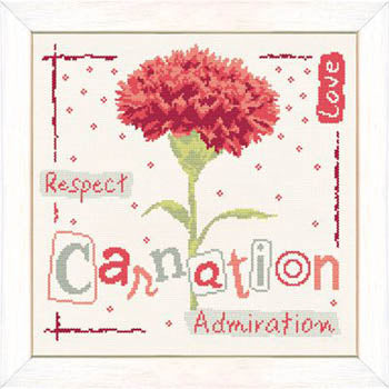 Carnation - Lilipoints