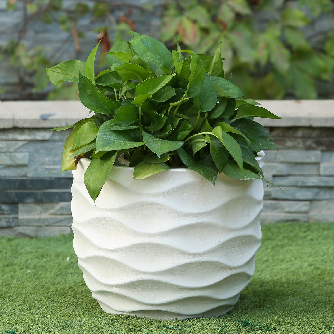 White Wavy Design Planter shown on green lawn filled with green plants