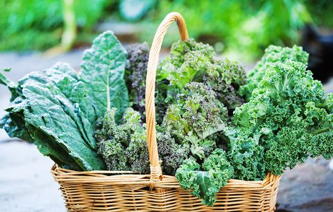 Curious Why Kale is the Sweetheart of the Yoga, Meditation & Ancient Philosophy Set?
