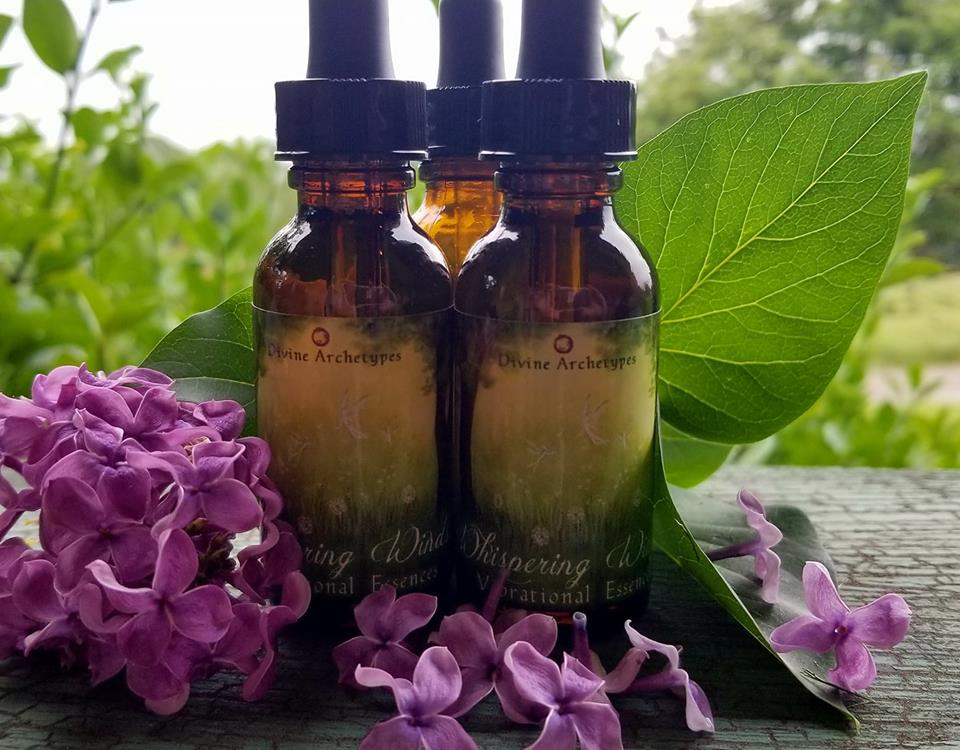 Whispering Winds Flower & Vibrational Essence Venus Retrograde Sale