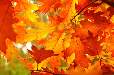 Vibrational Essences -  Fall Leaf Collection: Red