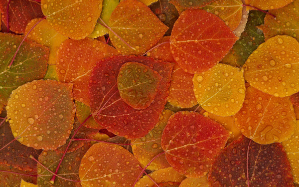 Vibrational Essences - Fall Leaves: Orange