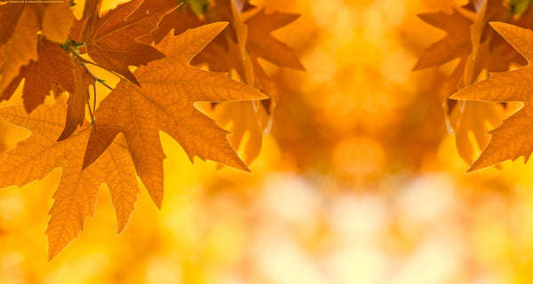 Vibrational Essences - Fall Leaves: Yellow