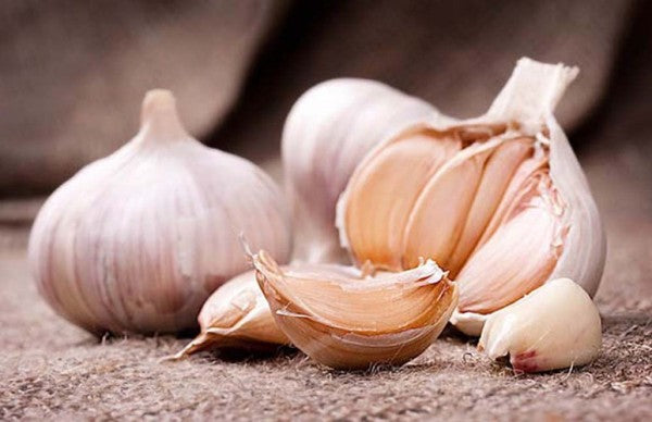 Garlic Vibrational Essence