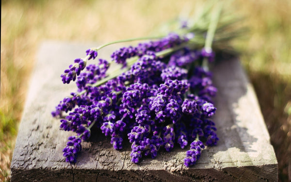 Lavender Essential Oil ~ Lavandula officinalis