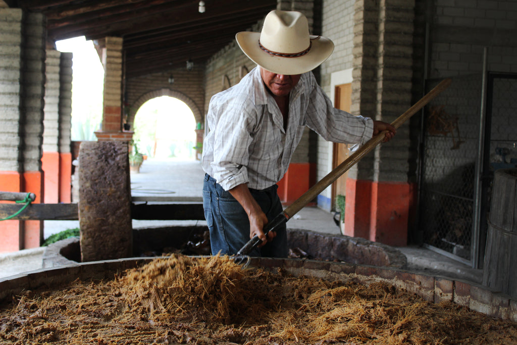Making mezcal bagaso in vats before distillation