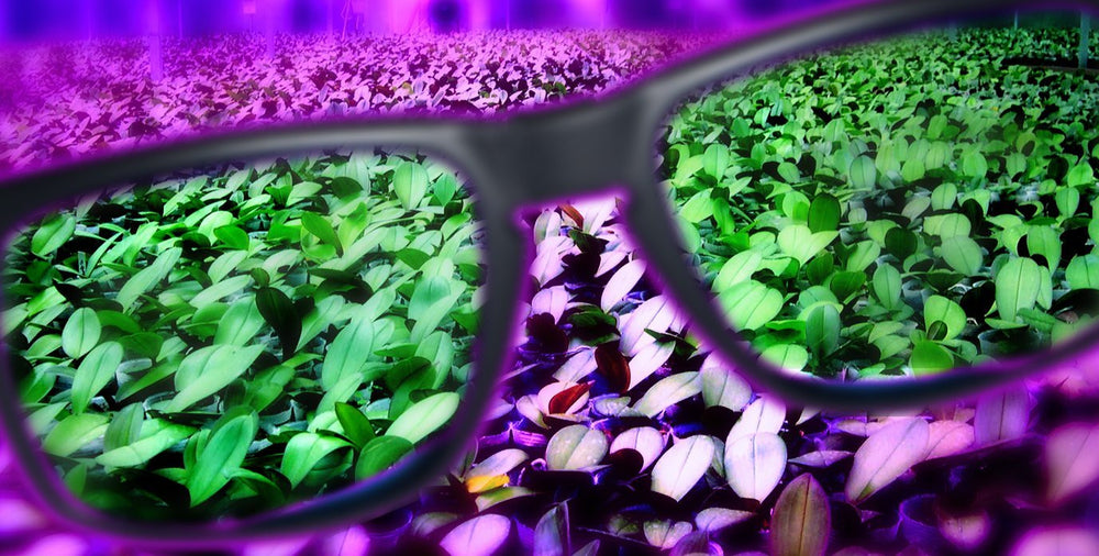 Wavelength Horticultural Grow Room LED Protective Glasses