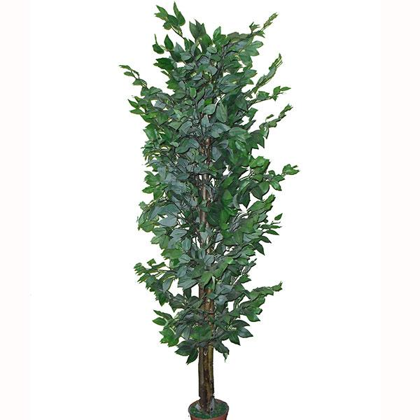 Planta Artificial Ficus 6Ft