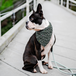 Load image into Gallery viewer, Dog Bandana - Gray Dots - RuffRuffShop.com