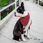 Load image into Gallery viewer, Red and White Circles Dog Bandana - RuffRuffShop.com