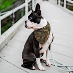 Load image into Gallery viewer, Dog Bones Camouflage Bandana - RuffRuffShop.com