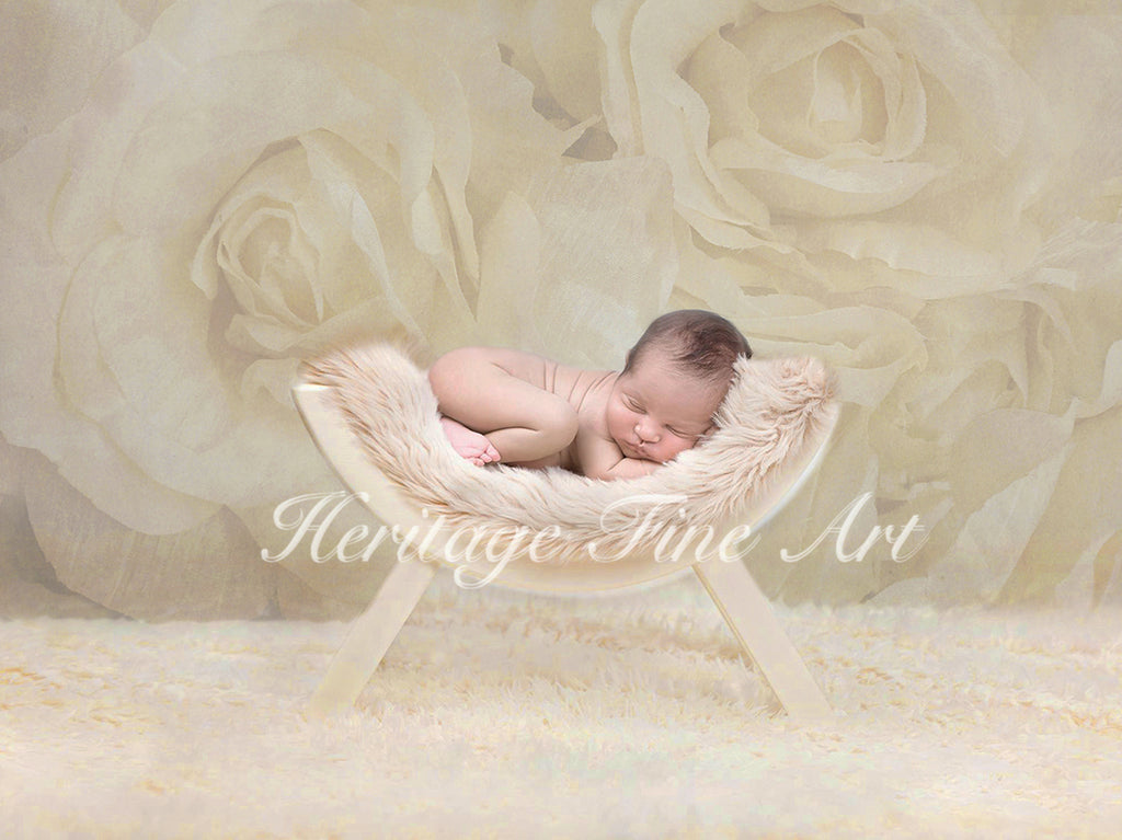 Floral Digital Backdrop - textured ivory roses