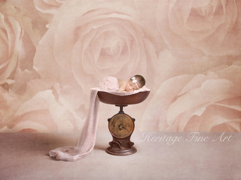 Floral Digital Backdrop - textured light pink roses