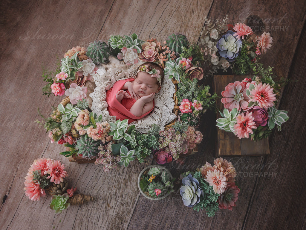 Newborn Digital Backdrop - Lovely succulent display on a wood effect background