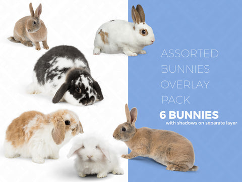 Assorted 6 Pack Bunnies- Digital Overlays