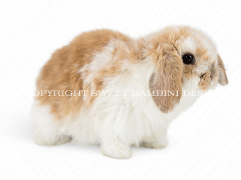 Bunny overlay - Cute light brown & white Bunny - Instant download