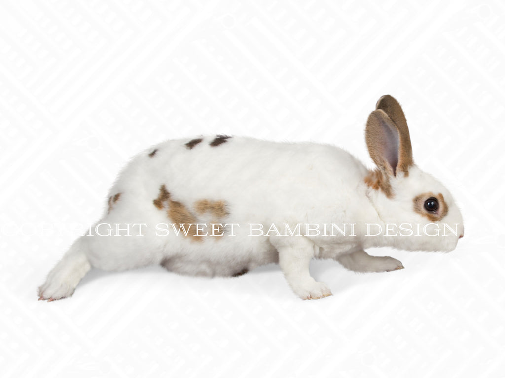 Nosy Brown & White Bunny overlay - layered PSD file, instant download
