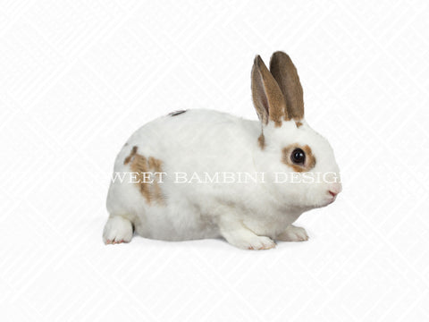White & Brown Bunny Easter overlay - layered PSD file, instant download