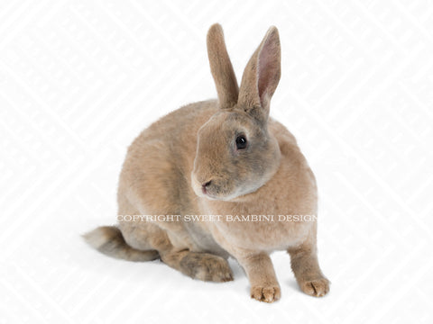Brown Bunny overlay - layered PSD file, instant download