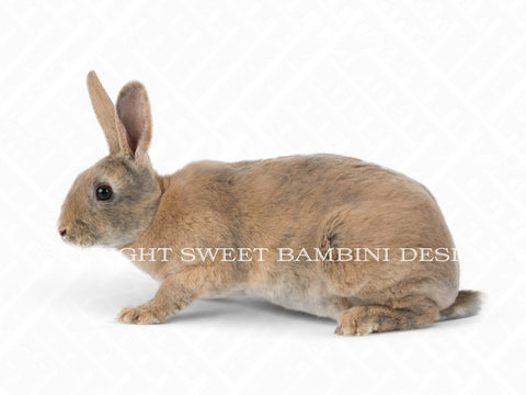 Brown Bunny digital overlay - layered PSD file, instant download