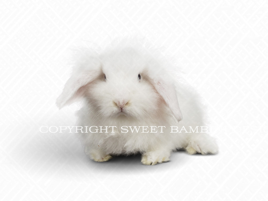 White Fluffy Bunny Easter overlay - layered PSD file, instant download