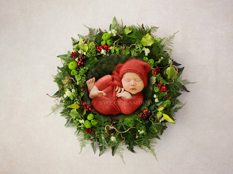 Digital Backdrop Newborn - Christmas Red Berry Nest - Noelle