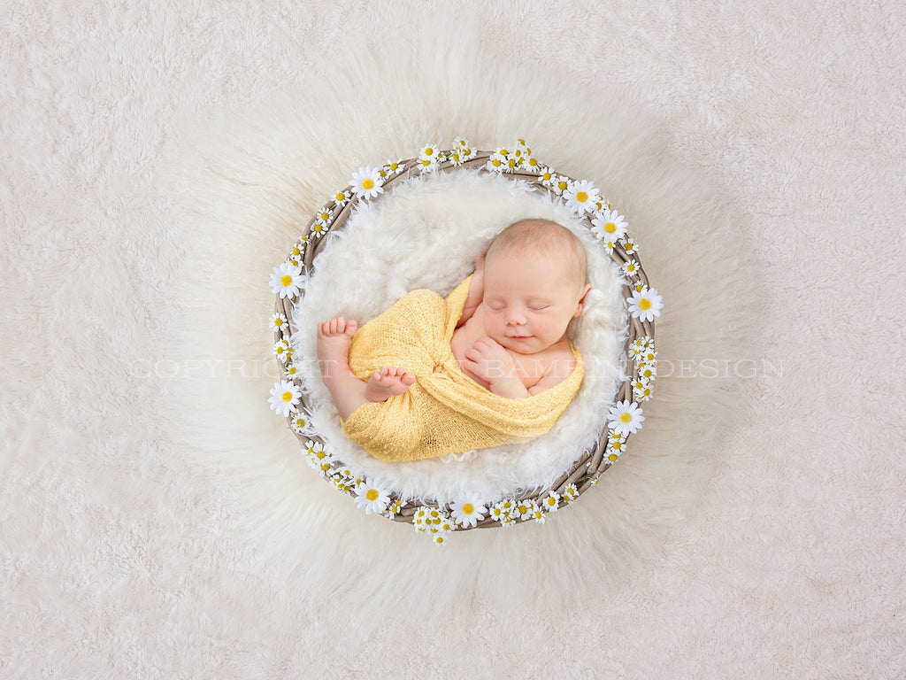 Newborn Digital Backdrop -  Beautiful Fresh Daisy Nest on a Cream Fur Background