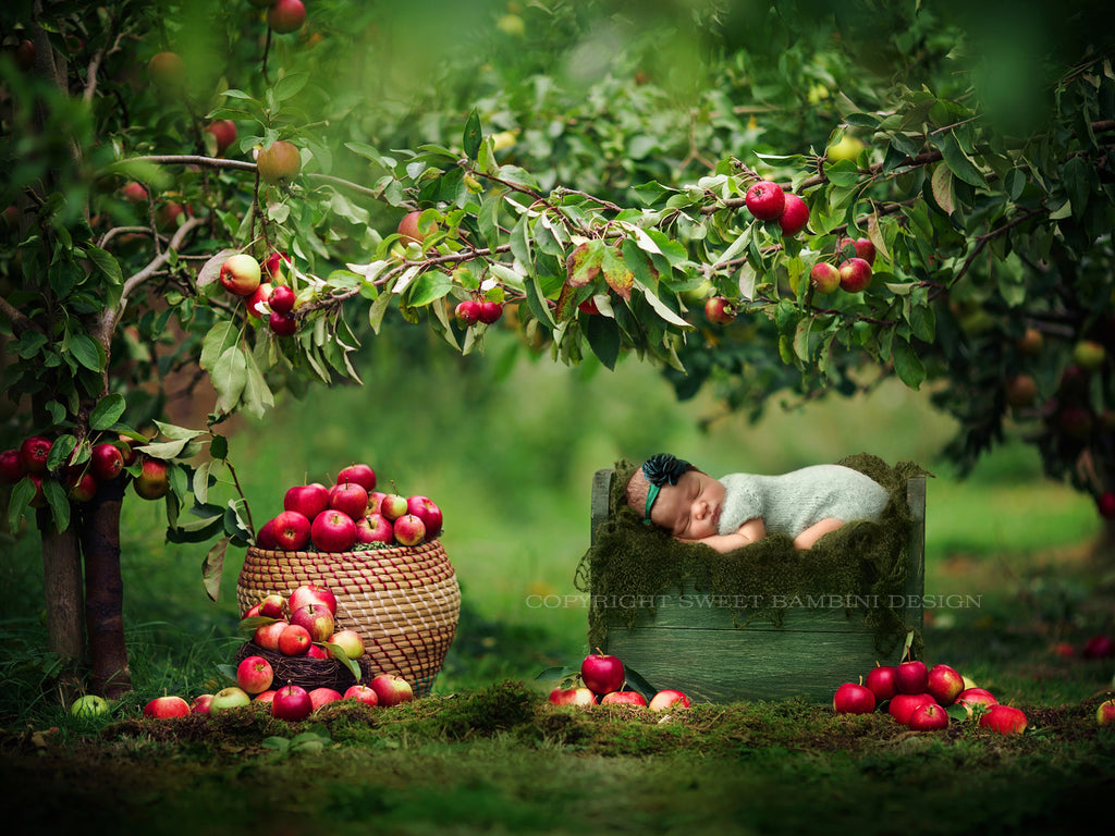 Newborn Photography Digital Backdrop for girls or boys - Little Bed under the apple trees